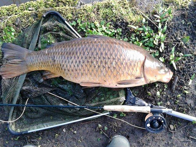 A GUC double figure carp, caught on the fly by Alan Emery
